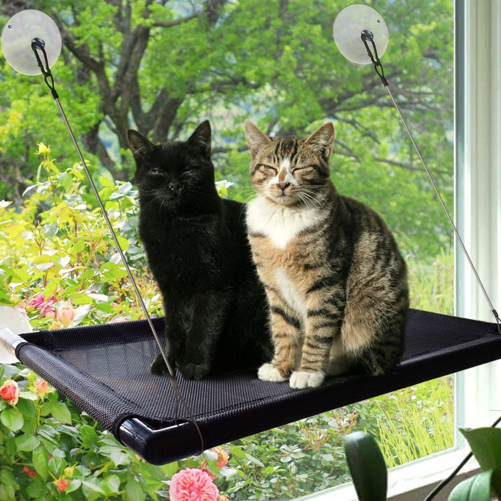 image of two cats enjoying a window perch that gives outside visibility