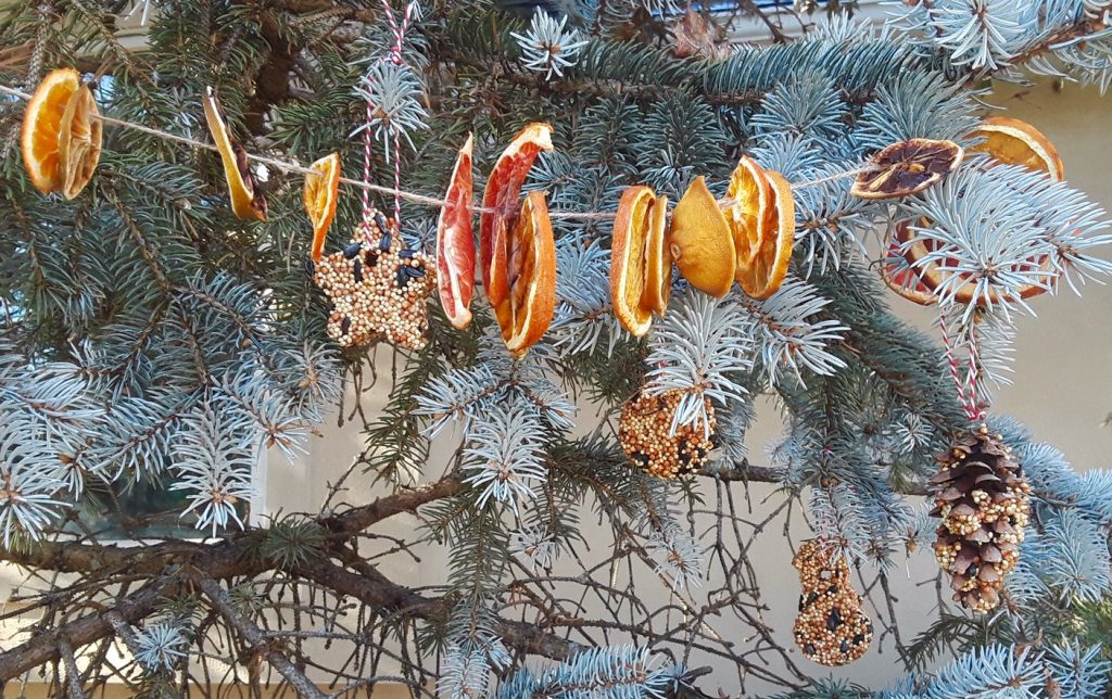 image of dried fruit strung on a string near a Christmas tree.