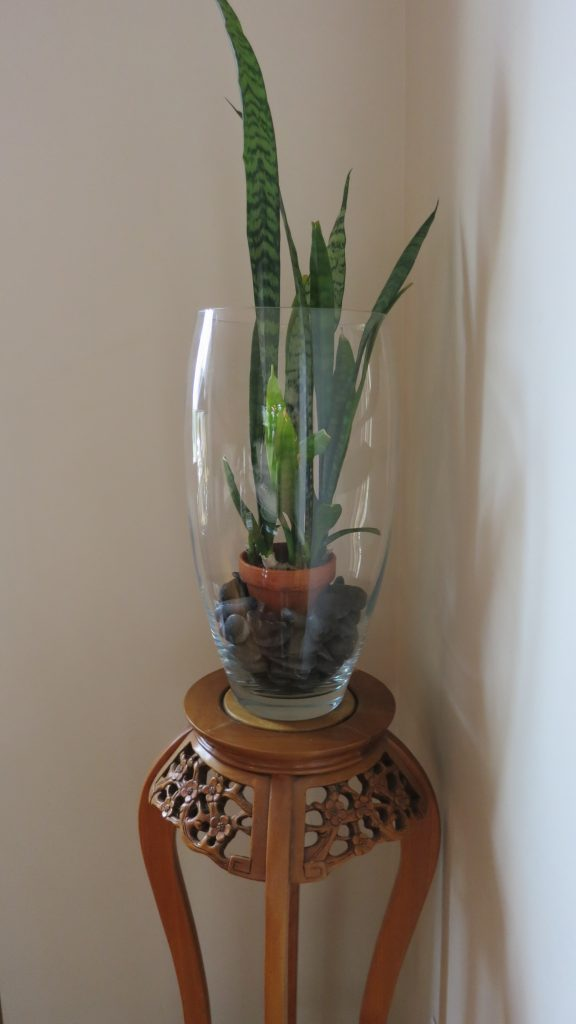 image of a potted snake plant placed in a beautiful tall crystal vase looks very classy