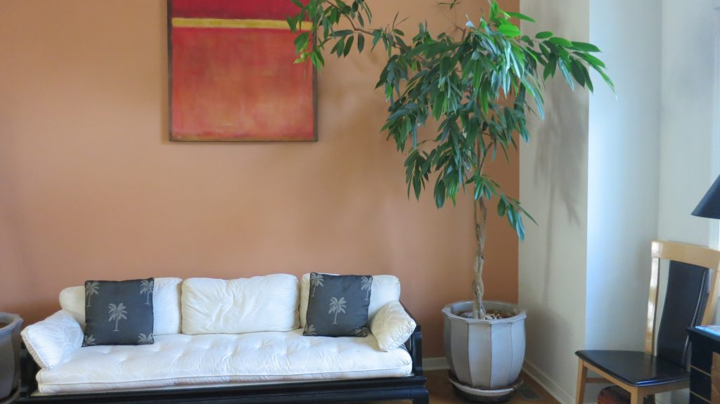 image of a tall potted Ficus tree placed in a corner to save space