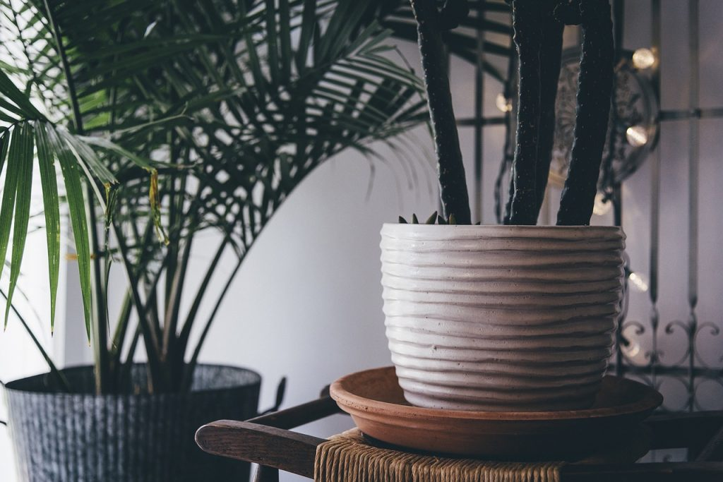 image of two beautiful pots with a color that compliments the houseplant