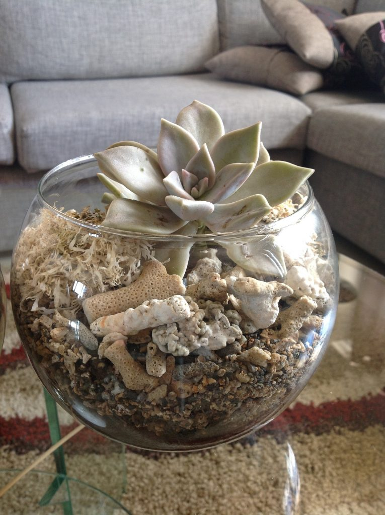 image of a fishbowl filled with sand and seashells