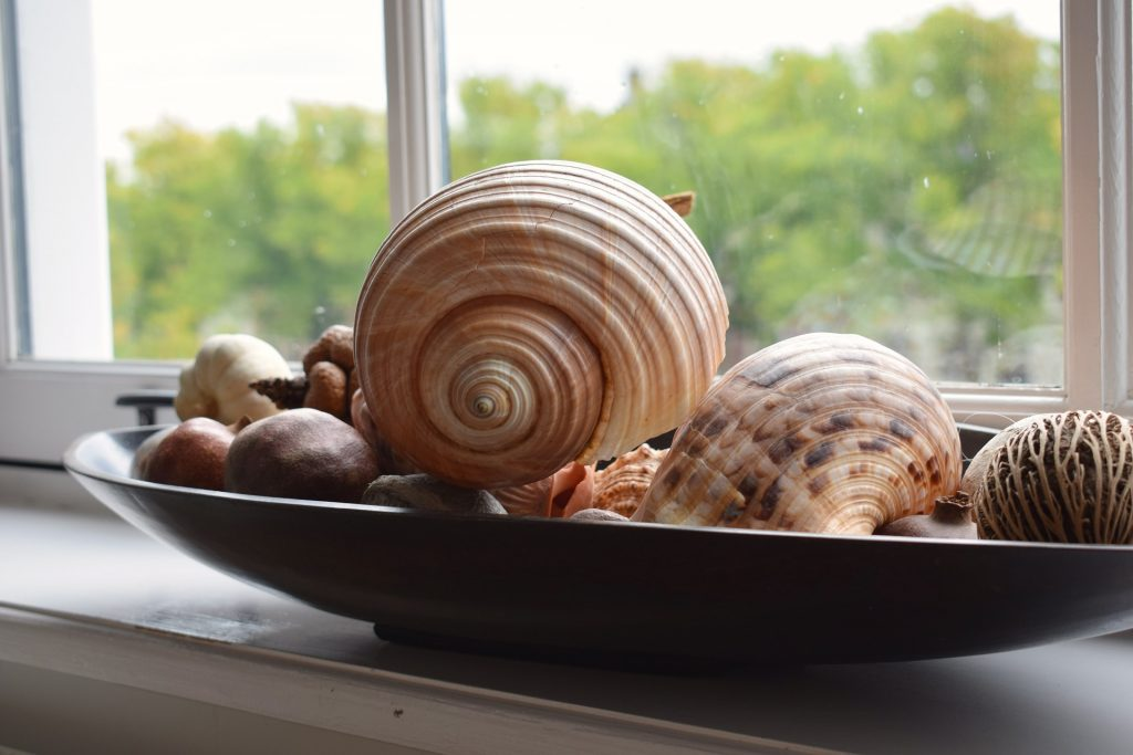 image of sea shell decorating accessories on a table near a window remind you of the beach