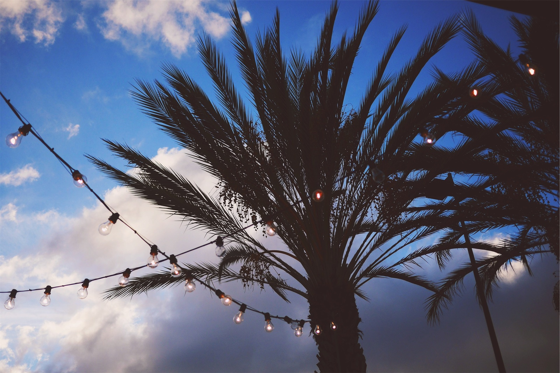image of palm trees at night with string lights